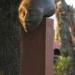 a05-luna-bronce-20cm-long-2004